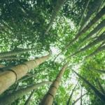 Bambus Wald Holzuhren Welt